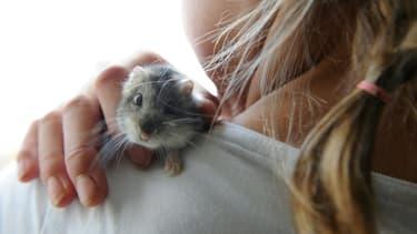 Une jeune fille joue avec un hamster nain