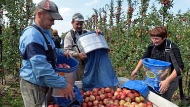 Les agriculteurs polonais, en mal de main d'oeuvre, font appel aux saisonniers ukrainiens.