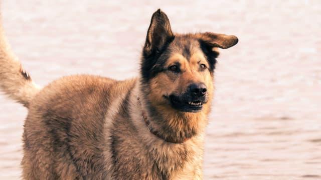 Un chien - Image illustration