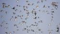 Des oiseaux en Inde, le 07 décembre 2018.