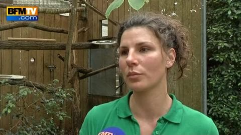 Comment les singes ont été volés au zoo de Beauval?