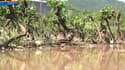 6 000 hectares de vignobles ont été détruits par un violent orage de grêle dans le Var?