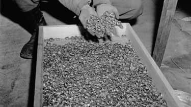 Un soldat plonge ses mains dans une caisse remplie des alliances volées aux prisonniers de Buchenwald, le 5 mai 1945.