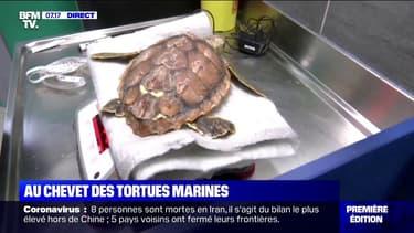"""Un """"hôpital"""" à La Rochelle prend soin des tortues marines fragilisées par les eaux froides et les tempêtes hivernales"""