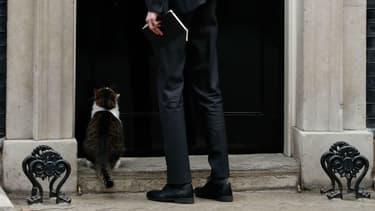 Photo d'un chat patientant devant le 10 Downing Street à Londres, demeure de la Première ministre britannique, pour rentrer, prise le 15 janvier 2019.