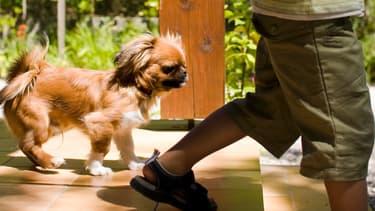 Les enfants ont souvent un lien particulier très fort avec leurs animaux de compagnie.