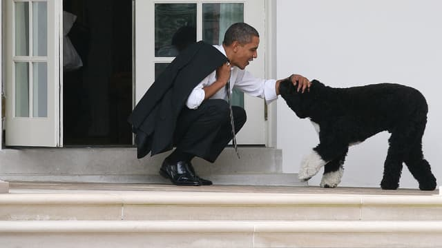Barack Obama et son chien Bo, en 2012, à la Maison Blanche.