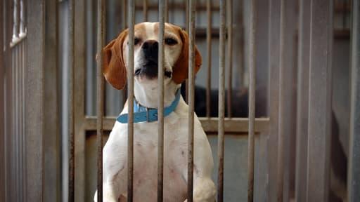 En 2013, 16.000 chiens ont été adoptés à la SPA.