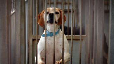 Un chien patiente dans un refuge de la SPA de Gennevilliers