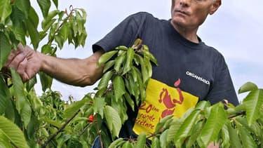 Les producteurs de fruits et légumes manquent cruellement de main d'oeuvre saisonnière, conséquence de l'épidémie liée au  coronavirus et des fermetures de frontières qui en découlent.