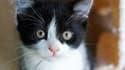 Sauvé des flammes par son chat - Lundi 22 février 2016