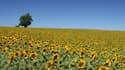 Invitée de Bourdin Direct ce mercredi matin sur RMC, Marion Guillou, présidente directrice générale de l'INRA (Institut national de recherche agronomique), est notamment revenue sur le saccage des vignes OGM d'une unité de l'Inra à Colmar la semaine derni