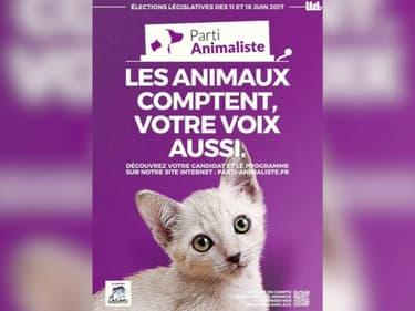 Européennes: comment expliquer l'engouement pour le parti animaliste ?