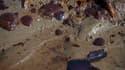 """Carcasse de crabe sur l'île de East Grand Terre en Louisiane. Le président Barack Obama se demande """"à qui botter le derrière"""" après la marée noire dans le golfe du Mexique, accentuant encore la pression sur BP. /Photo prise le 8 juin 2010/REUTERS/Lee Cela"""