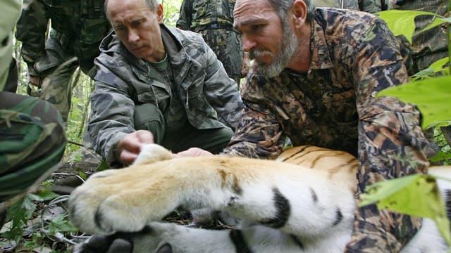 Vladimir Poutine œuvre régulièrement en faveur des animaux menacés, comme ici en mai dernier avec un tigre.
