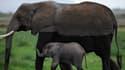 Le commerce de l'ivoire est complètement hors de contrôle au Mozambique