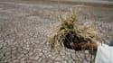 Ayant conquis le désert sur son propre territoire, Israël est disposé à mettre son savoir-faire au service des pays africains qui cherchent à s'assurer une production agricole régulière malgré une pluviosité de plus en plus imprévisible. /Photo d'archives