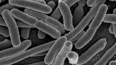 Nolan a été intoxiqué par la bactérie E.Coli