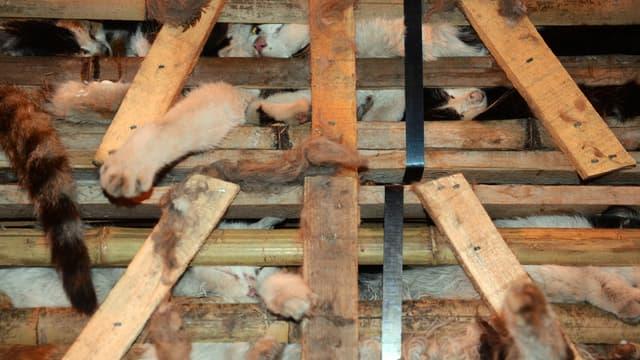 En Chine, la viande de chat est devenue très prisée.