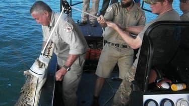 Le prince Harry a capturé un crocodile de plus de 3 mètres lors de son voyage en Australie.