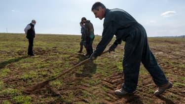 Philippe Rodier (d) tente de réparer les dégâts causés par les campagnols dans un champ à Gourdièges, le 4 mars 2021