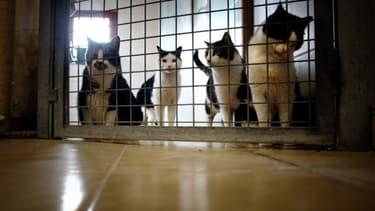 Des chats pris en charge dans un refuge de la SPA