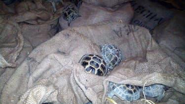 Des tortues saisies par Interpol lors de l'opération