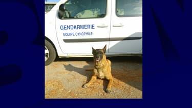 Gibson est un berger belge malinois de 8 ans spécialisé dans la recherche de personne et la défense