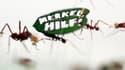"""""""Merkel, à l'aide!"""" scandent ces fourmis coupe-feuille."""