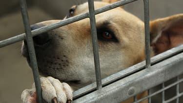 """Le président de la SPA Jacques-Charles Fombonne lance une pétition en ligne pour demander au gouvernement """"l'interdiction de la vente en animalerie""""."""