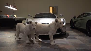 Devant une magnifique LaFerrari, deux lionceaux blancs.