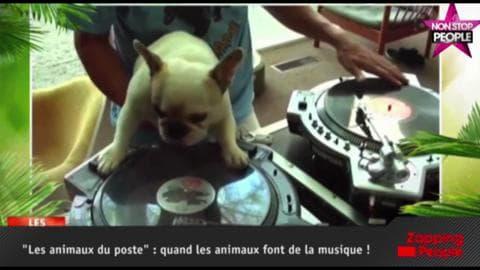 Le Zapping People : Quand les animaux font de la musique