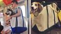 Dans le métro new-yorkais, les animaux ne voyagent pas en soute. mais en sac.
