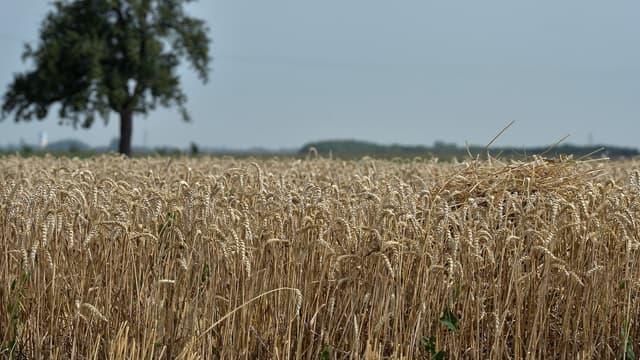 En France, les Safer, sociétés chargées de veiller à l'aménagement rural et foncier, disposent d'un droit de préemption lors de la cession d'une exploitation, afin de défendre et protéger l'agriculture familiale.