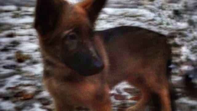 Le chien que la Russie va offrir à la France.