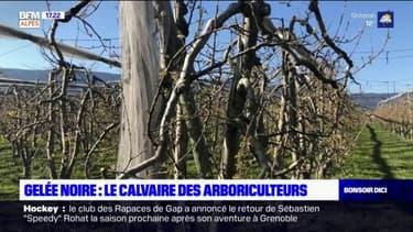 """Gelée noire: pour cet arboriculteur de Lagrand, le but """"n'est jamais de vivre de compensations"""""""