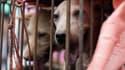 Des chiens en cage sur un marché chinois, en 2015. (photo d'illustration)