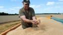 Les agriculteurs arrivent en seconde position du classement des Français les plus heureux au travail.