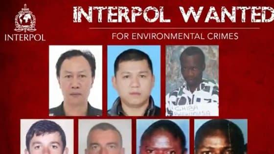 L'appel d'Interpol.