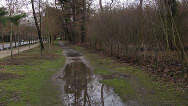L'allée de Longchamp, l'une des principales voies traversant le Bois de Boulogne. (illustration)