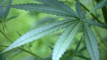 L'homme cultivait du cannabis quand les gendarmes ont sonné à sa porte.