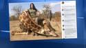 Sabrina Corgatelli a déclenché un tollé après avoir abattu une girafe.