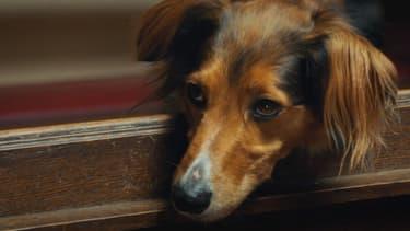 Image extraite du clip contre l'abandon des animaux.