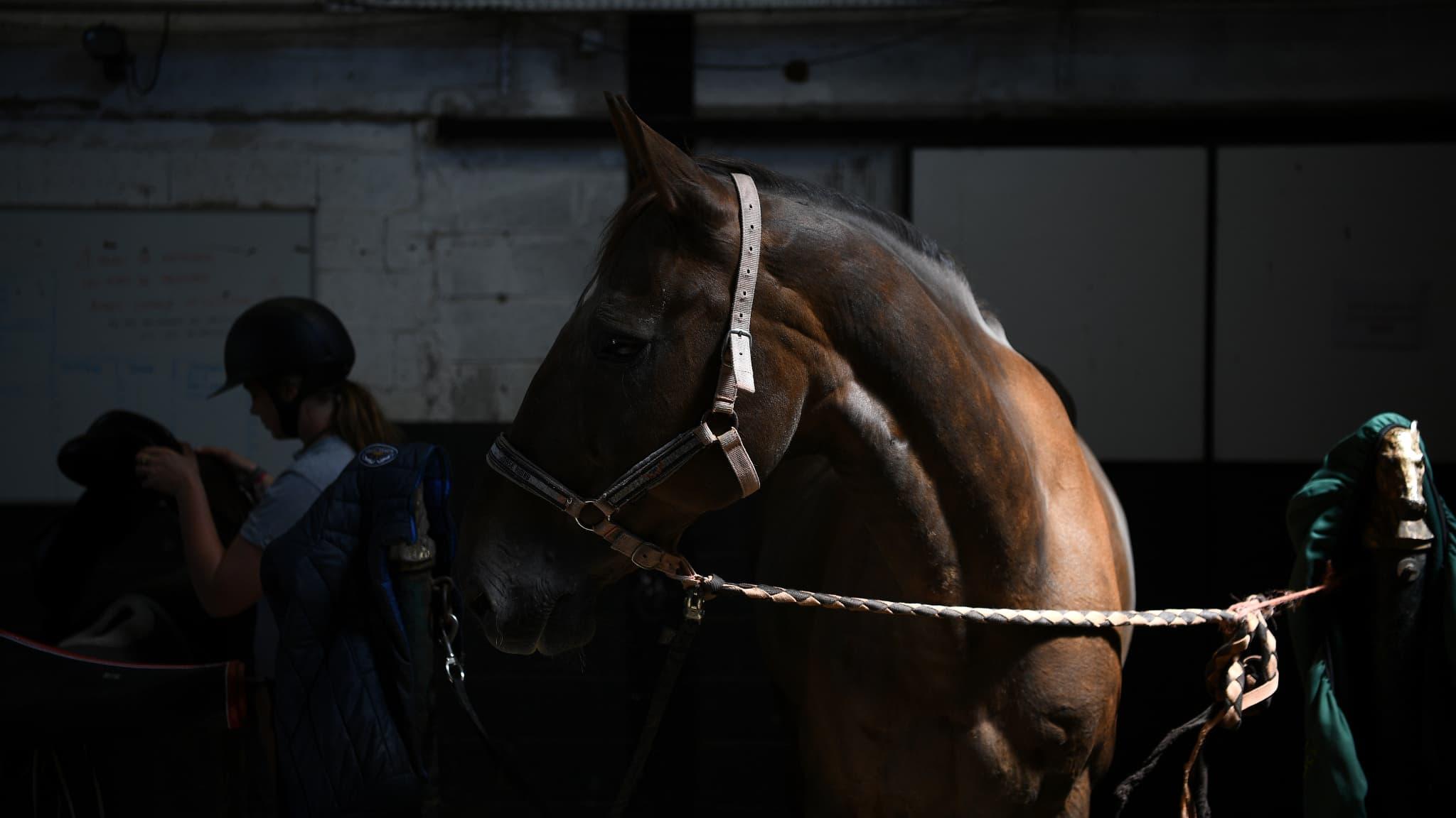 Qui sont les tueurs de chevaux ?