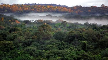 Photo de la forêt guyanaise prise dans les environs du village de Saül, en Guyane, le 4 mars 2007. (Photo d'illustration)