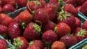 Cette année, les fraises vendues en grande surface n'ont pas séduit les Français.