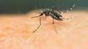 La virus Zika est transmis par les moustiques.
