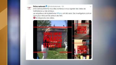 Plusieurs vidéos de maltraitance animale ont été signalées sur la plateforme Pharos.
