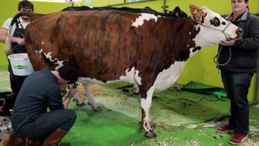 En cause, les quelque 99.000 tonnes de viande bovine -imposées au taux préférentiel de 7,5%-  que les quatre pays latino-américains devraient pouvoir exporter vers l'UE, fragilisant un peu plus les 85.000 éleveurs français de vaches allaitantes.