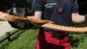 Un serpent des blés a été capturé par les pompiers de Paris.